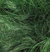 Efco χόρτο πράσινο 50γρ.