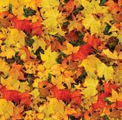 """Χαρτόνι """"φύλλα φθινοπώρου"""" 50x70εκ. 300γρ."""